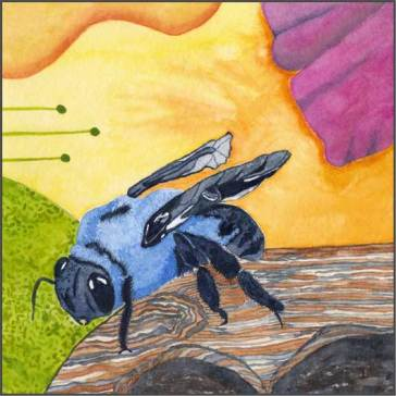 Carpenter Bee, 6 x 6 watercolor on 140 lb. cold press paper. © 2013 Sheila Delgado
