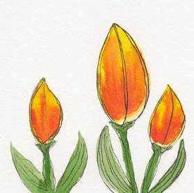 Tulips. 4 x 4, watercolor, pen on Arches 140 lb. cold-pressed paper. © 2019 Sheila Delgado.