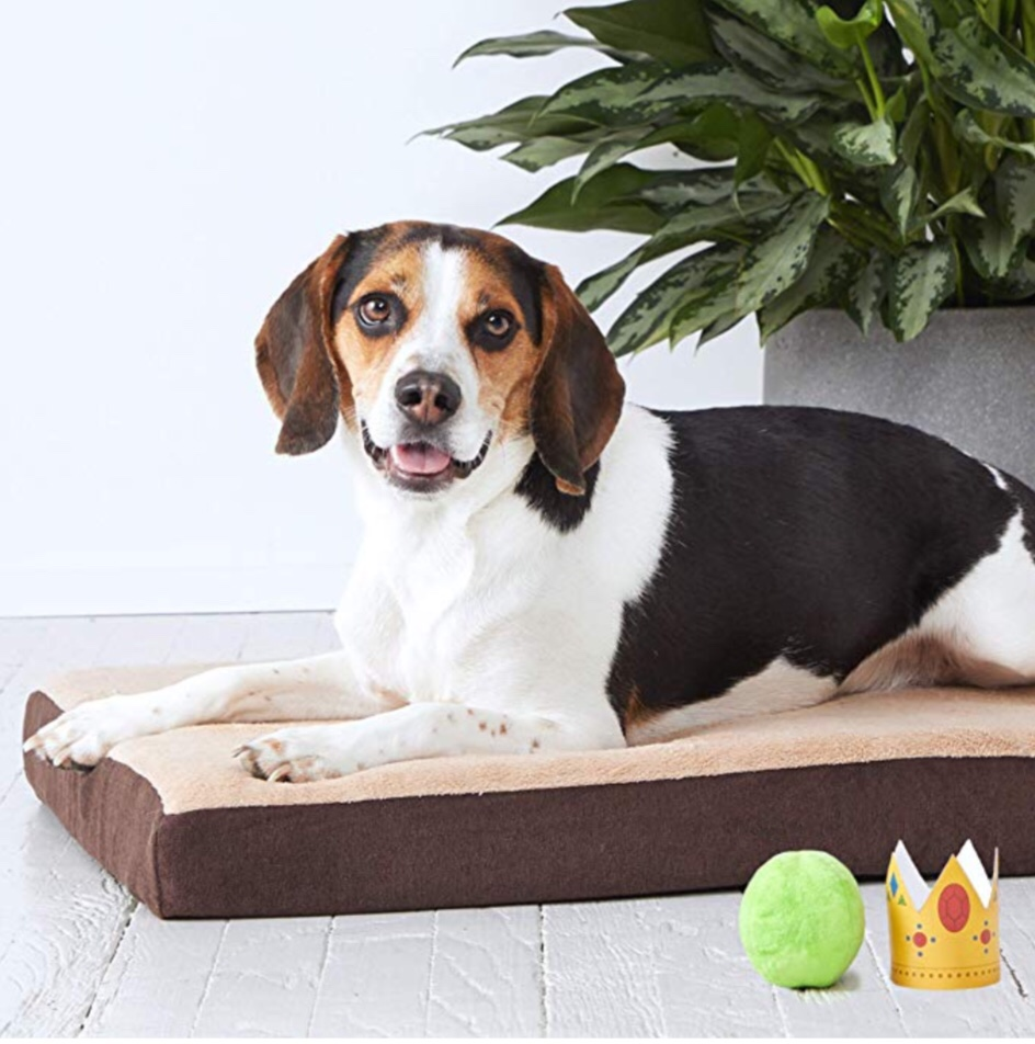 Memory foam dog bed in multiple sizes and colors