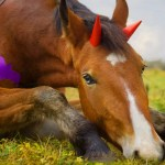 These Horse Halloween Costumes Will Make You Want A Trusty Steed Of Your Own Sheknows