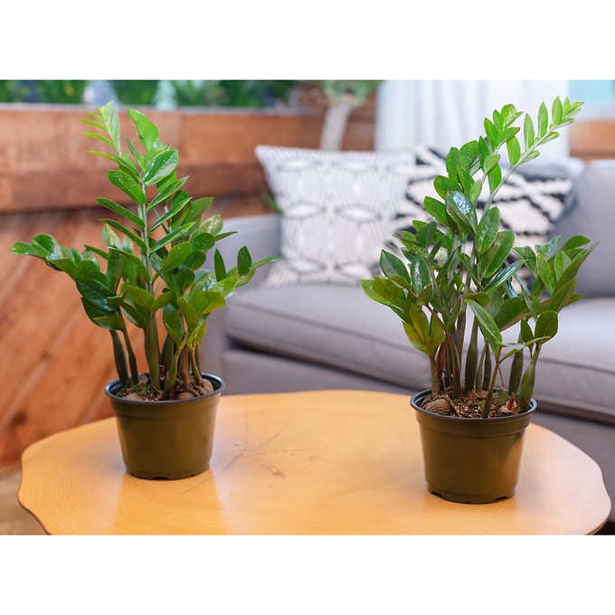 Costco Houseplants Shop The Best Most Affordable Deals Sheknows