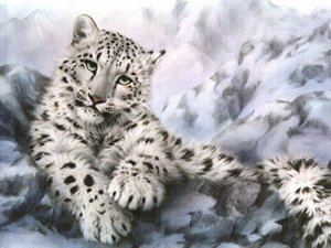 snow-leopard-portrait