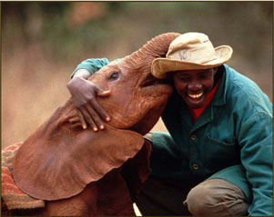 Keeper receiving hug from baby elephant