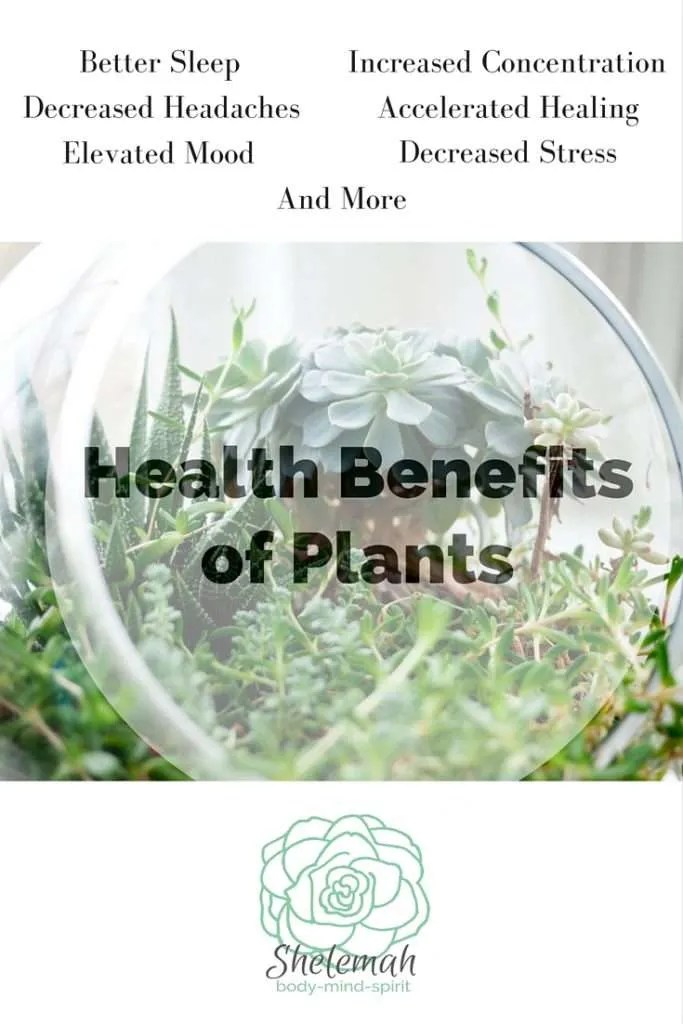 Healthbenefitsofplants