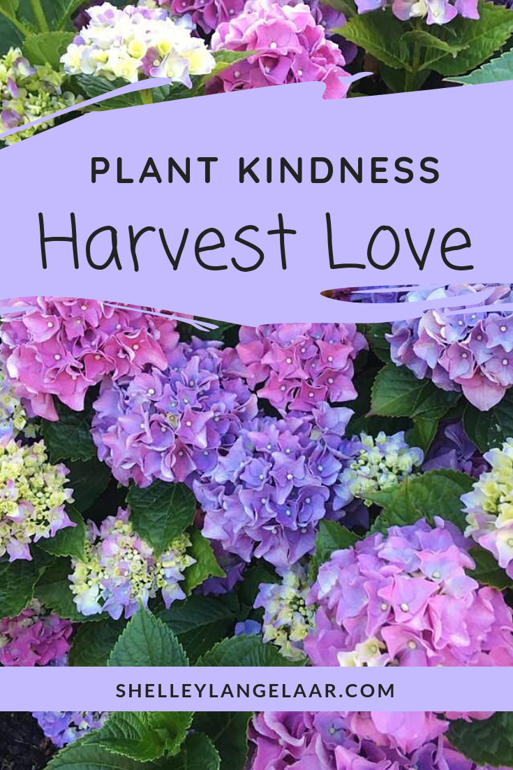 Plant Kindness, Harvest Love – Be Intentional