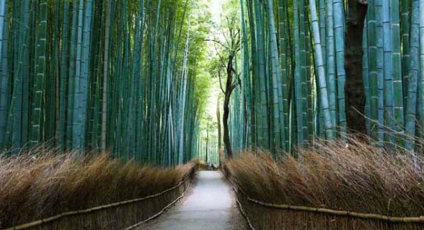 Path of the bamboo in Arashiyama by Ludovic Lubeigt is used with permission under CreativeCommons license for Shelley Schlief, PhD, PsyD - therapist