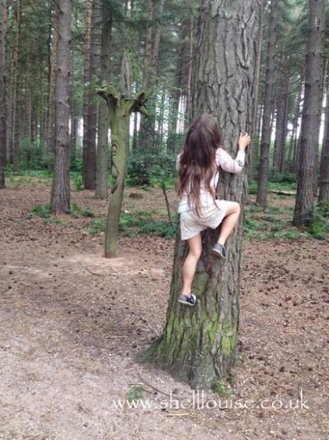 Ella trying to climb a tree