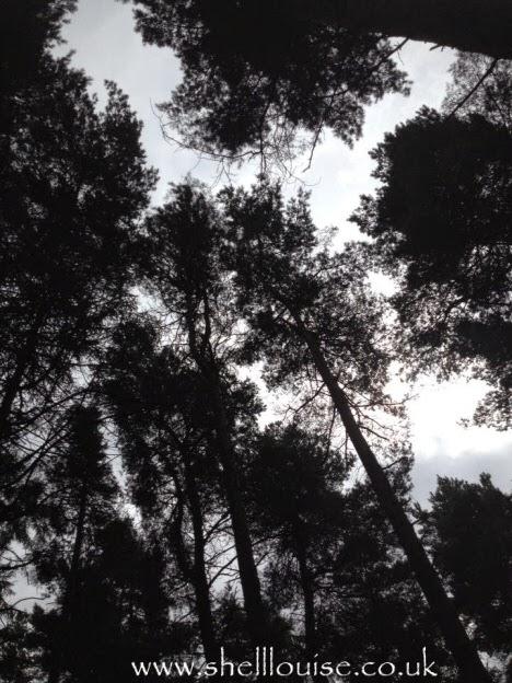 week 10 - sky through the trees