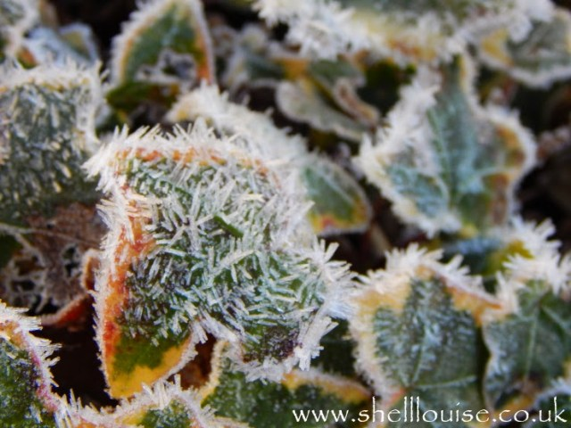 New camera - Macro setting - frost on a leaf