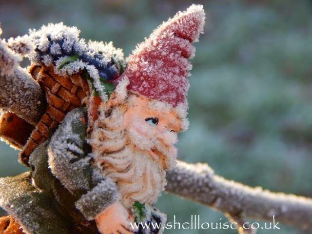 January 4th - tree gnome covered in  frost