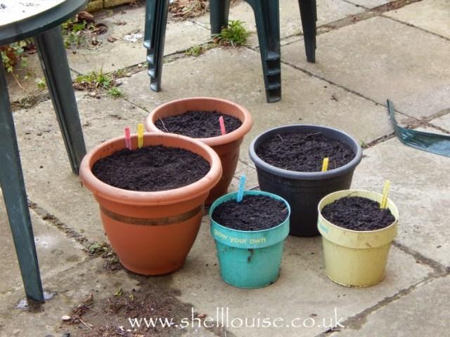 summer bulbs all planted