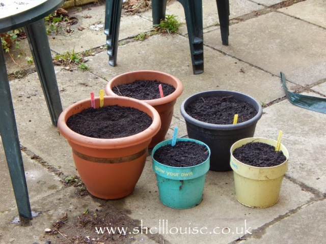 5 pots all planted up with summer bulbs
