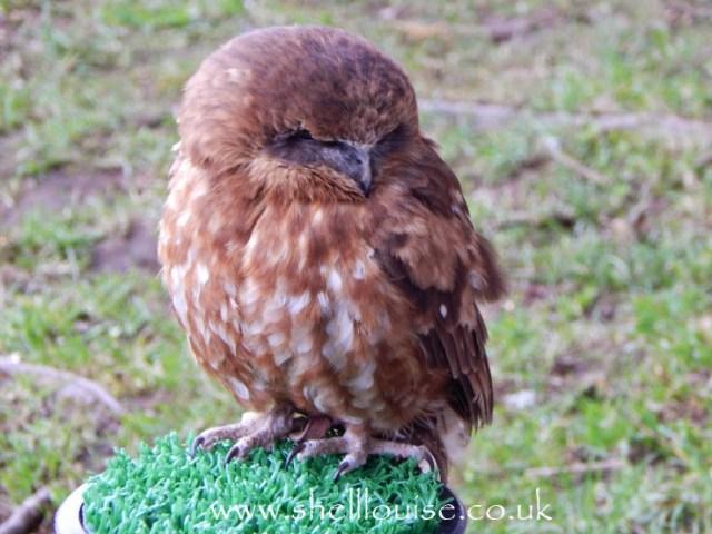 Bird display at Rufford Abbey
