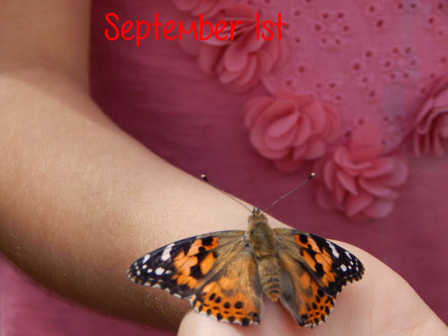 Ella releasing her painted lady butterfly