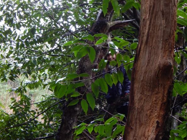 Ella climbing a tree at hartsholme park