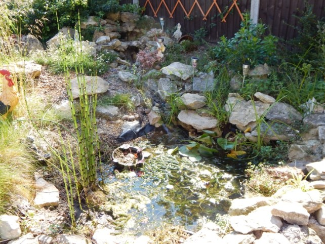 pond before the rain