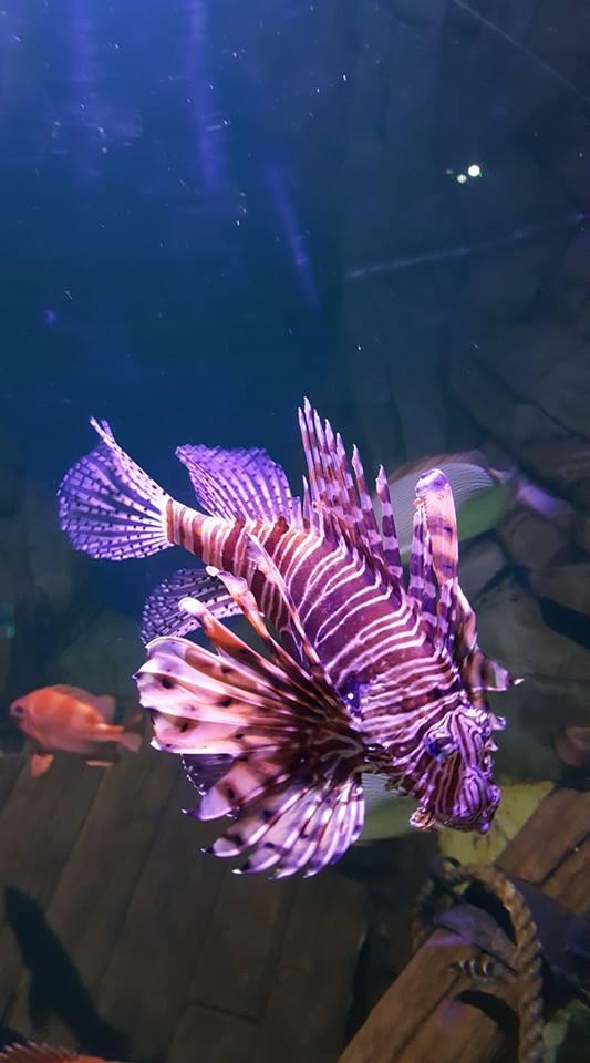 skegness-aquarium-011