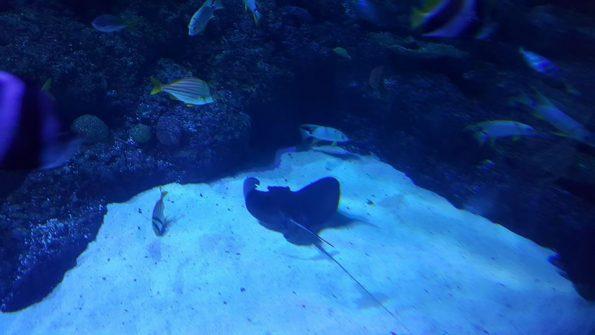 skegness-aquarium-014