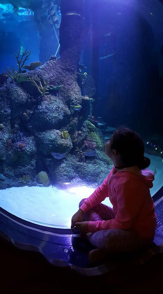 skegness-aquarium-03