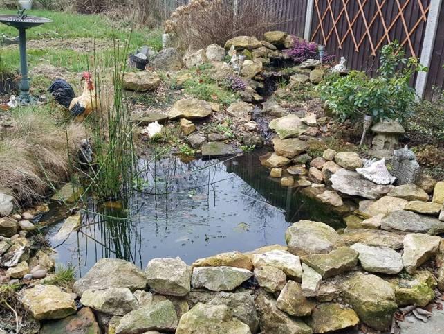 garden pond makeover