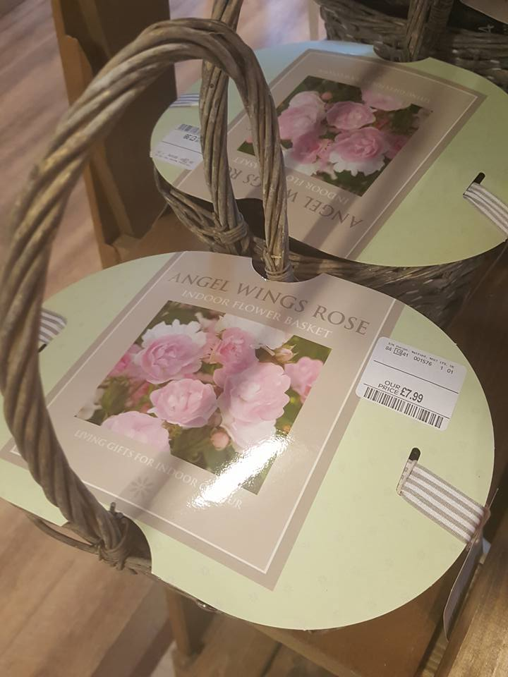 Mother's Day at HomeSense Rose Growing Kit