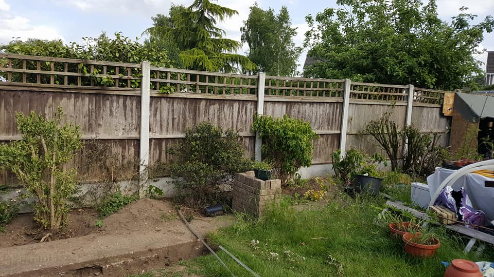 Gardening party - bushes to dig up