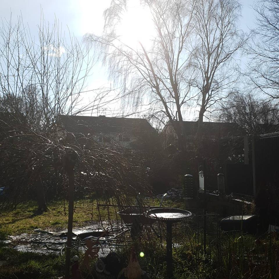 February 2019 1 day 12 pics - the snow has gone