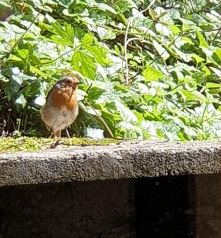 Our little robin friend who kept coming for a visit