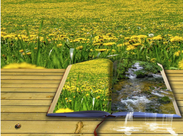 book in front of a field of flowers