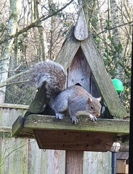 squirrel on the birdhouse