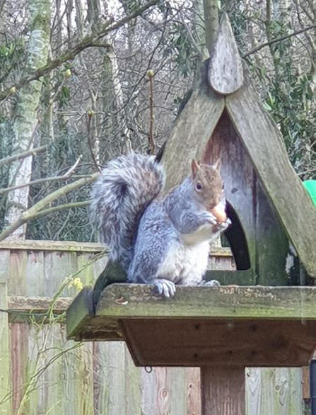 squirrel on the bird house