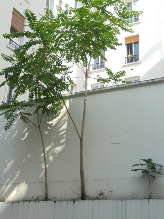 Tree of heaven UNESCO