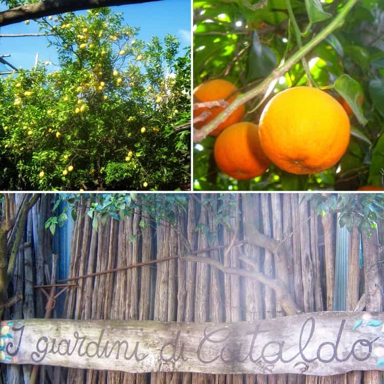 The entrance to the garden in Sorrento with pictures of a lemon tree and a close up of an orange.