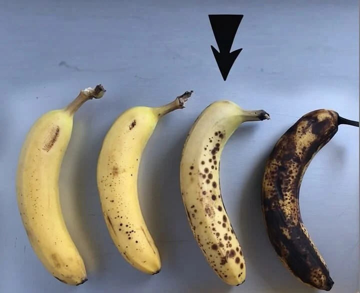 The four different levels of banana ripeness is demonstrated using real bananas.