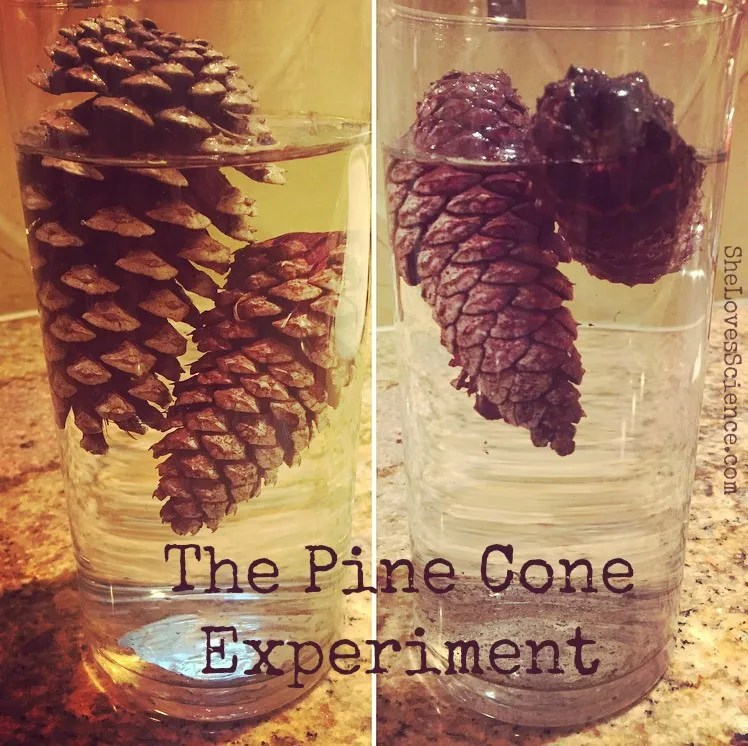 The Pine Cone Experiment