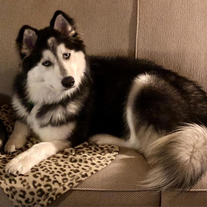 Max looking cute