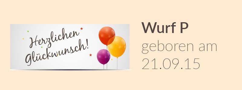 Der P-Wurf hat Geburtstag