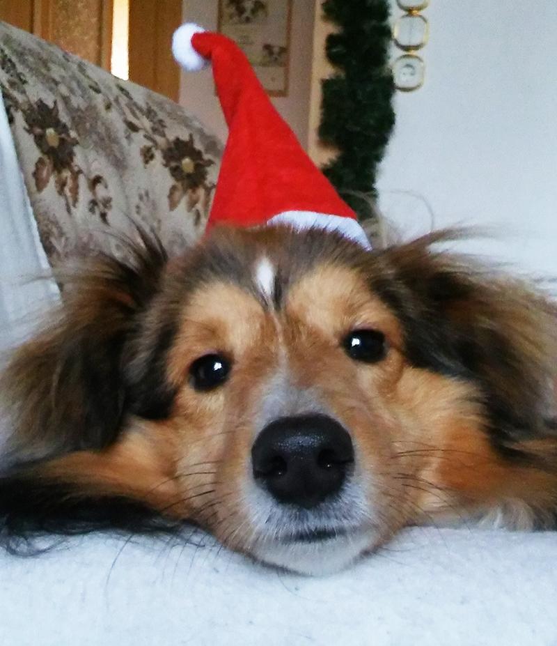 Frohe Weihnachten wünscht Quengo!