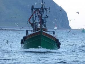 Ribhinn Donn II Davaar island in the background bringing in the catch Campbeltown