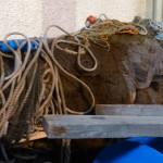 Ring Net used when shooting the net for herring