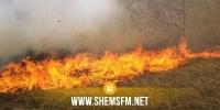 القصرين: حريق في مساحات شاسعة مزروعة حلفاء