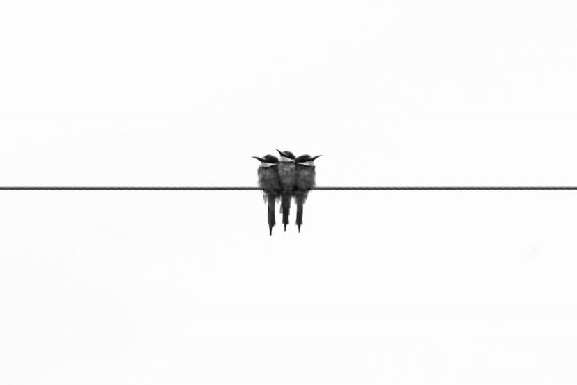 three-birds-wire