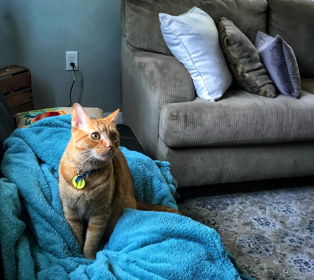 orange-cat-turquoise-blanket