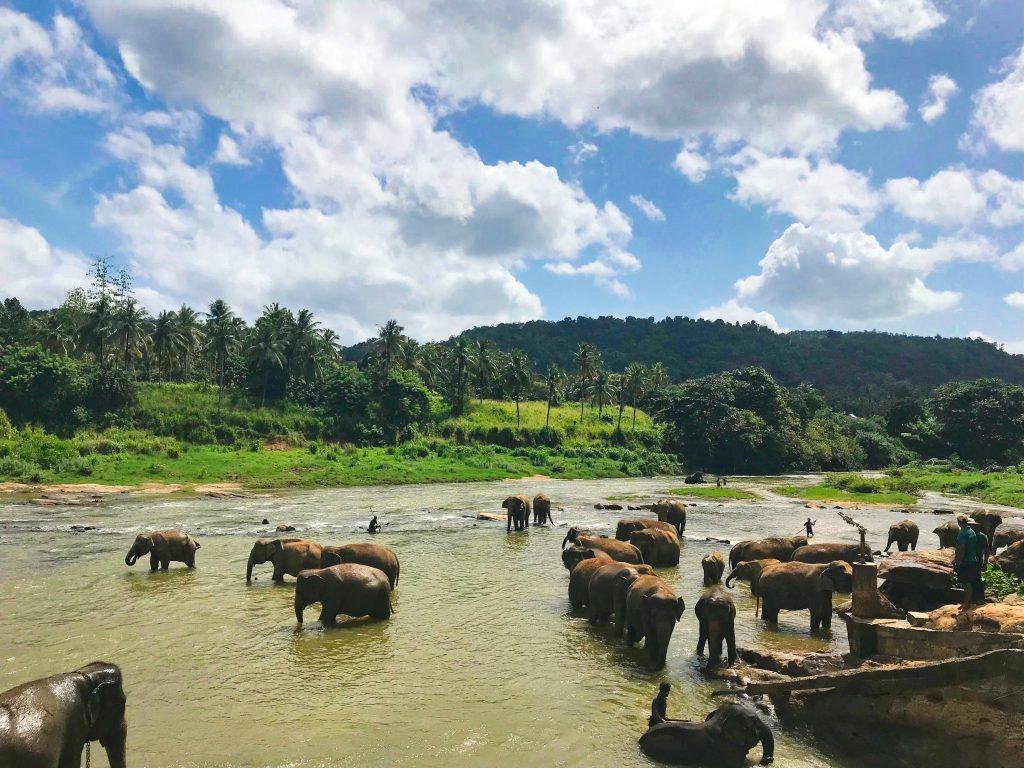 elephant safari sri lanka bucket list item