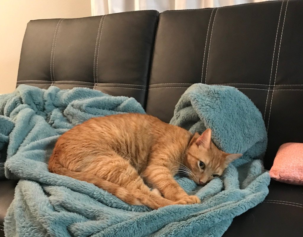 orange cat laying in blue blanket on black couch