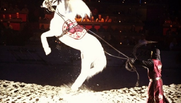 Amazing horse jump during Medieval Times dinner show in Myrtle Beach