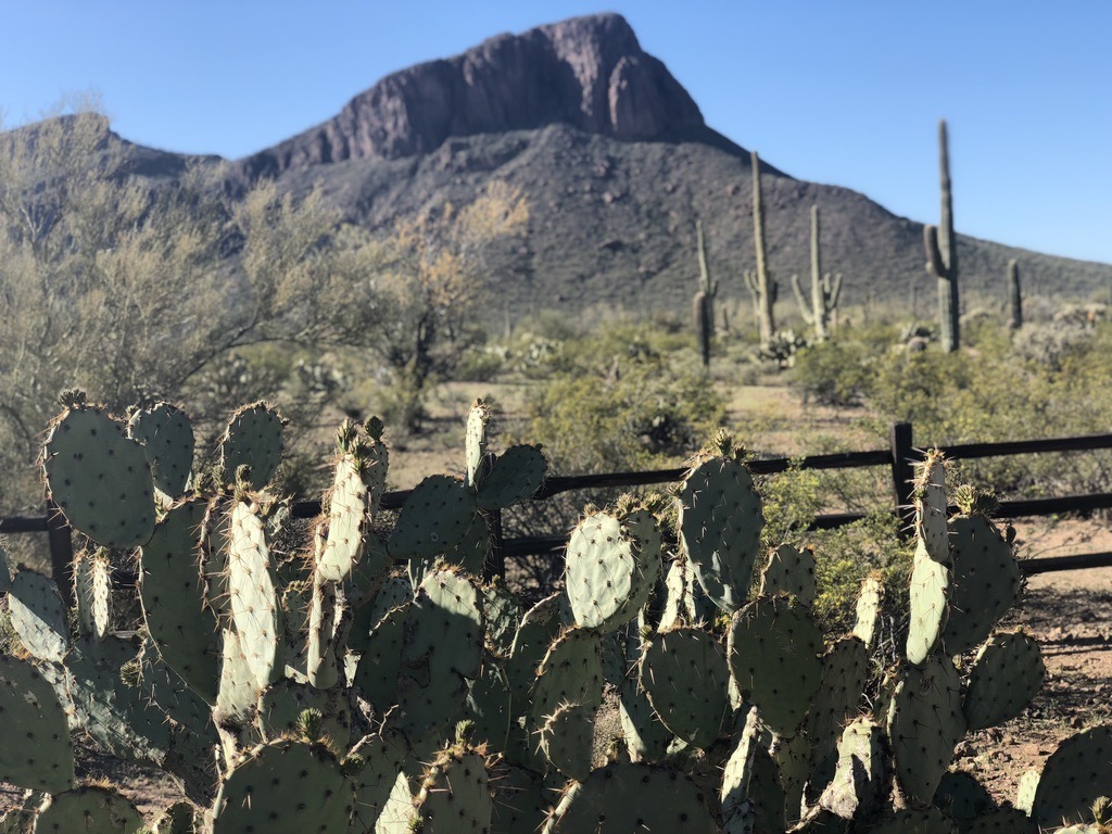 Arizona dude ranch fun: views for Sonoran mountains including Panther Peak and cacti at White Stallion Ranch