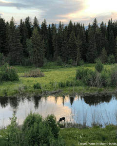 Family Fun Activities in Jackson Hole: BrushBuck Wildlife Tour