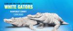 Rare White Alligators to Return to Newport Aquarium
