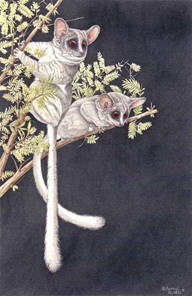 Sherry Steele Artwork - Pixies of the Night   Primates